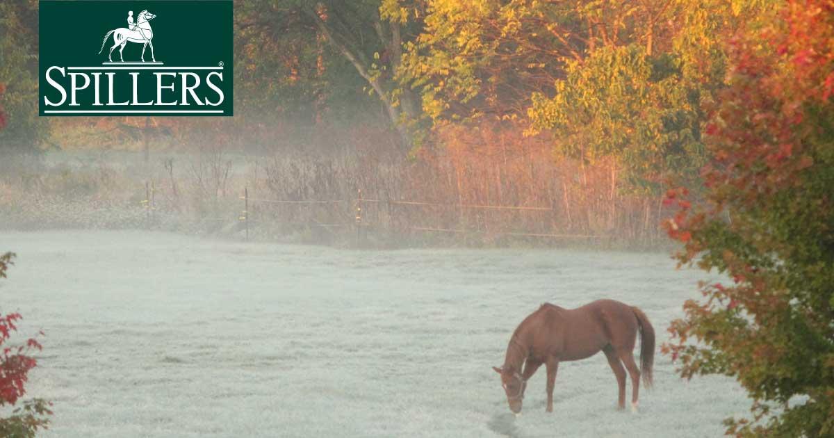Laminitis in horses and ponies
