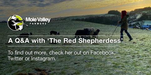 Hannah Jackson the red Shepherdess