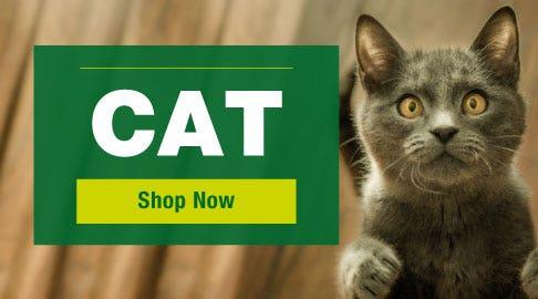cat - shop now