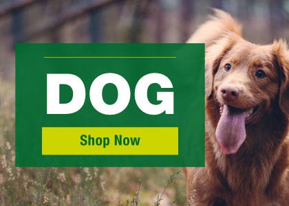 Dog - shop now